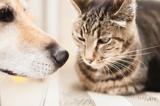 beautiful-life-gallery-cats-1415229