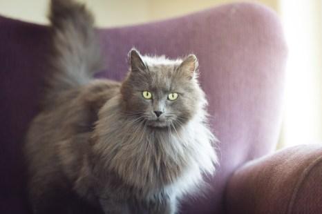 beautiful-life-gallery-cats-1489408