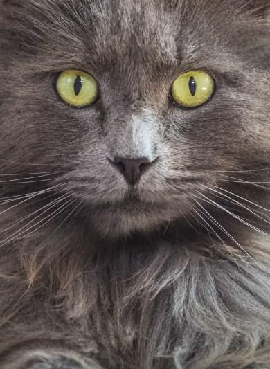 Cat up close.