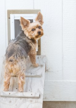 Don't come any closer, or I'll disappear through this doggy door faster than you can say the treat word.