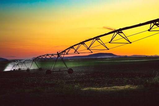 Irrigation equipment dispersing water on a crop at sunset