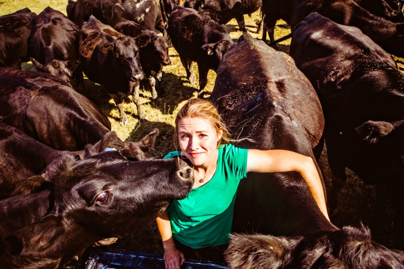 Ranch woman and herd of Black Angus cattle at feeding time.