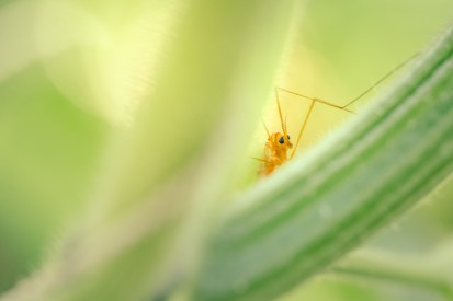 Cute bug peeking out from behind a green stem