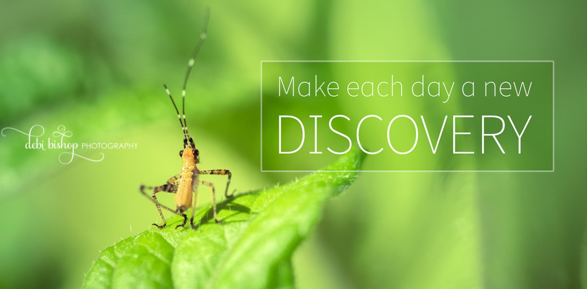 Make each day a new discovery.