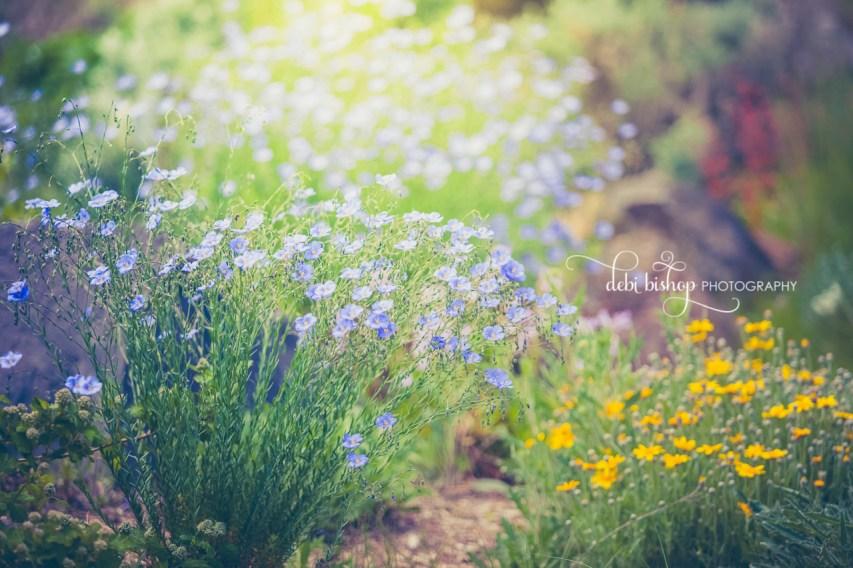 Flax flowers in the summer garden.