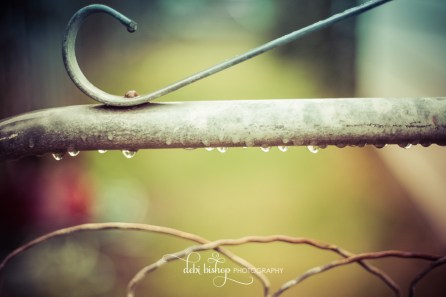 Garden gate in the rain.