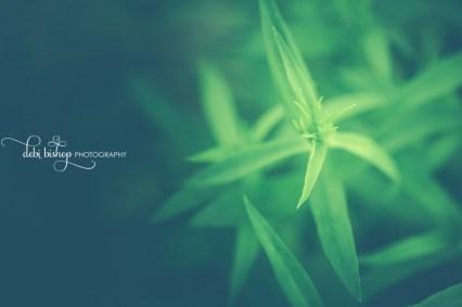Spiky green leaves of phlox flower.
