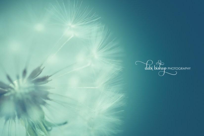 Dreamy dandelion macro