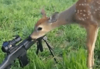 Can't Scare This Deer