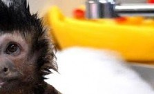 How About a Monkey For A Bath Toy?