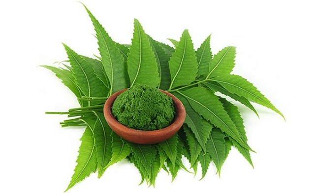 How to Use Neem and Sweet Flag For Head Lice Removal