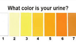 What Colour Of Your Urine Says About Your Health