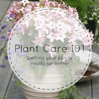 Winter Plant Care 101