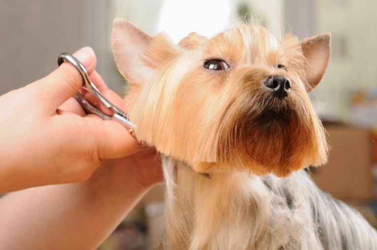 Pet Grooming in Lutz, Florida