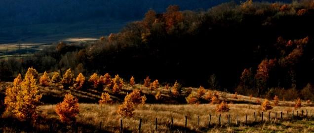 golden trees with fenceline