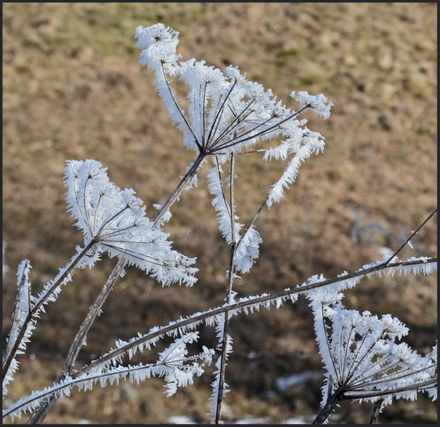 bouquet of ice flowers