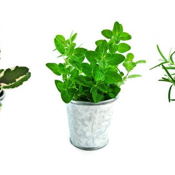 KEEPING YOUR HERBS FRESH
