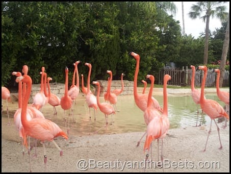 Sea World Pink Flamingos