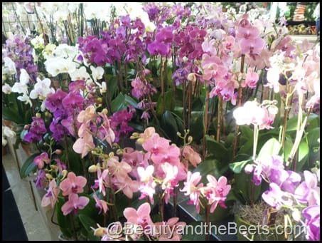 Whole Foods orchids