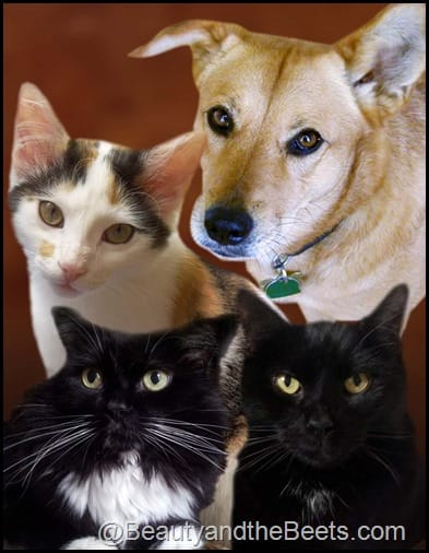 Cats_Large_Sample