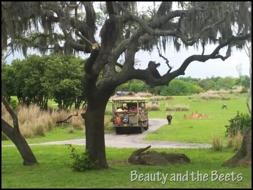 Animal Kingdom Wild Safari attraction Beauty and the Beets