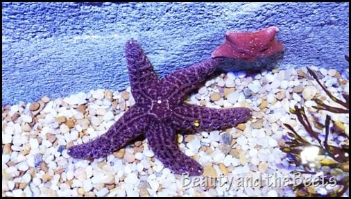 Starfish SEA Life Aquarium Orlando Beauty and the Beets