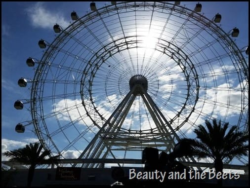 The Orlando Eye Beauty and the Beets