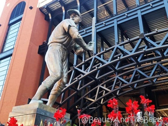 Stan Musial Busch Stadium Beauty and the Beets