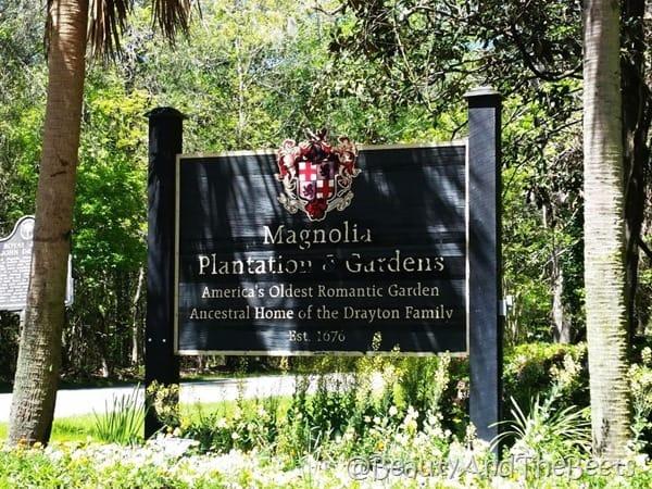 Magnolia Plantation and Gardens Drayton Beauty and the Beets