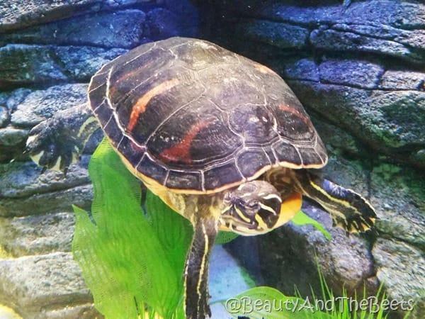 Sea Life Aquarium Orlando Beauty and the Beets