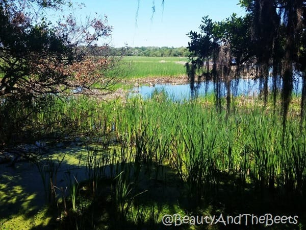 swamp and rice fields Magnolia Plantation Beauty and the Beets