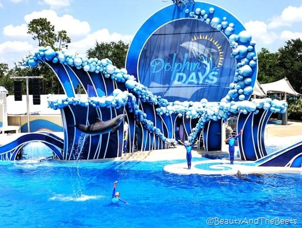 Dolphin Days Sea World Orlando Beauty and the Beets (2)