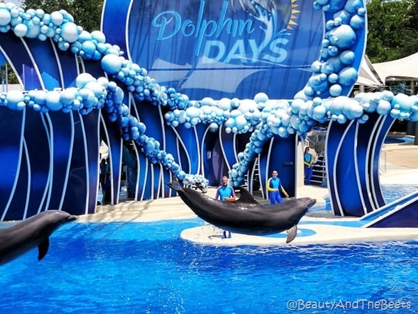 Dolphin Days Sea World Orlando Beauty and the Beets (4)