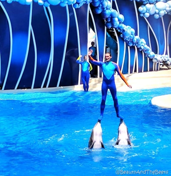 Dolphin Days Sea World Orlando Beauty and the Beets (5)