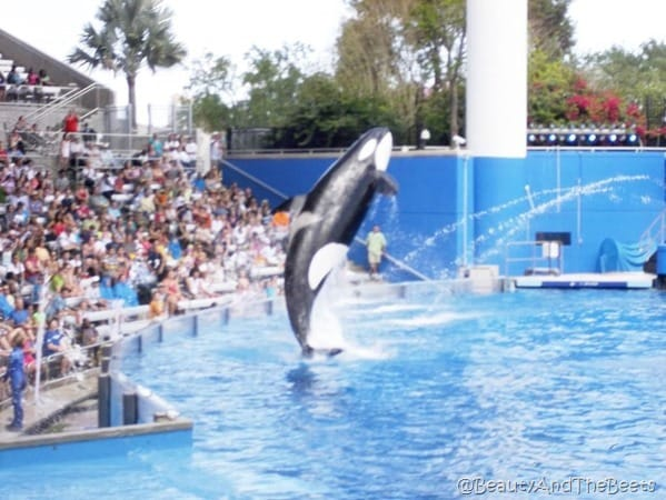 Sea World (5)