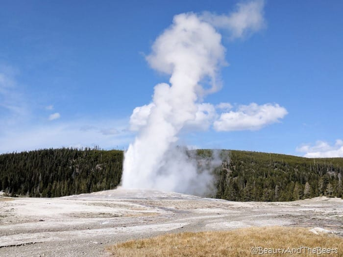 Old Faithful Yellowstone National Park Wyoming Beauty and the Beets
