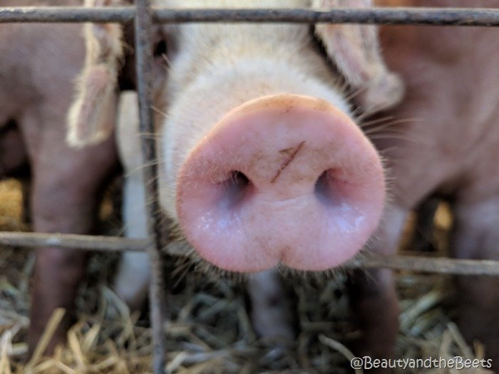 #FarmFoodTour Kansas pig nose Beauty and the Beets