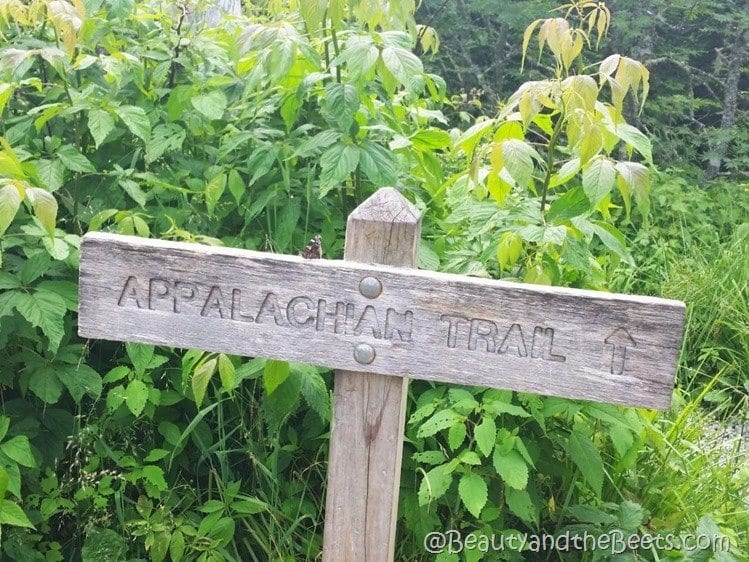 Clingmans Dome Appalachian Trail Beauty and the Beets