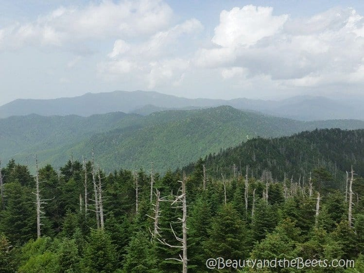 Clingmans Dome Smoky Mountains Beauty and the Beets