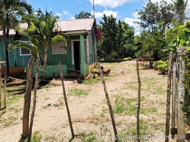 La Romana batay Dominican Republic Beauty and the Beets