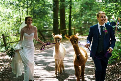 Alpacas - Pointless things I want for my wedding