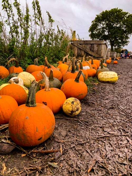 Hurleys Pumpkin Patch