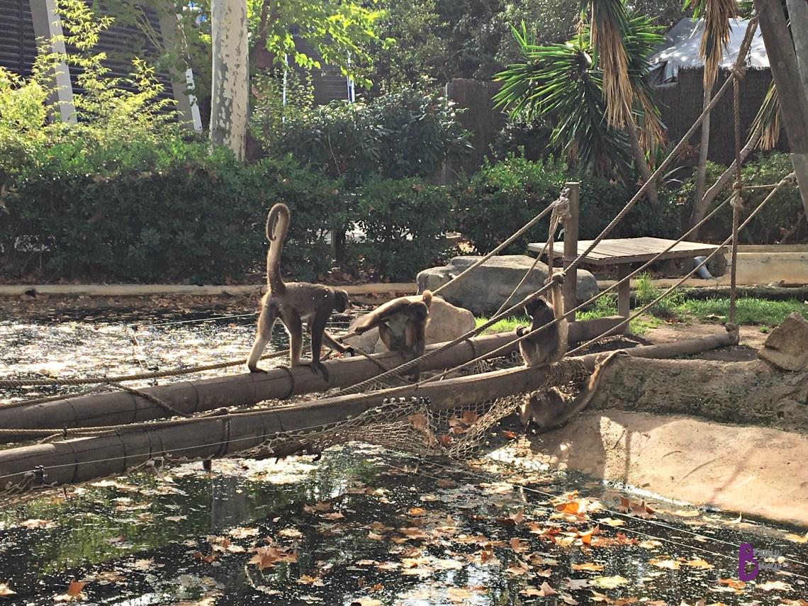 Zoo de barcelona monkeys
