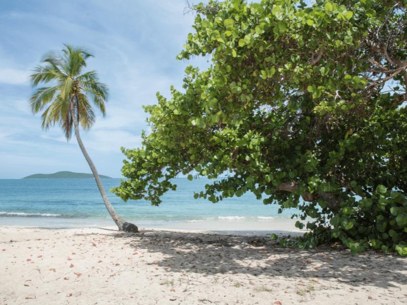 Buck Island St. Croix
