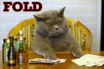 fold-poker-cat