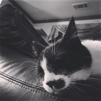 Sleeping HawkEye 🐱💋