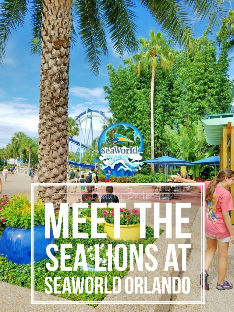 Meet The Sea Lions At SeaWorld Orlando