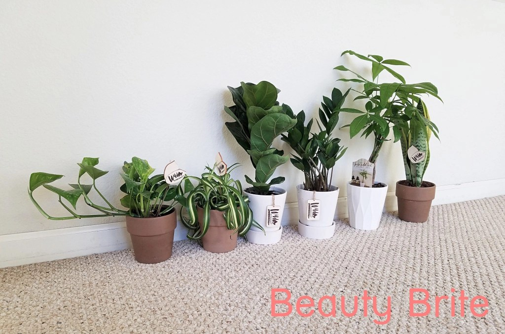 6 Houseplants To De-Stress Your Home And Purify The Air - social media