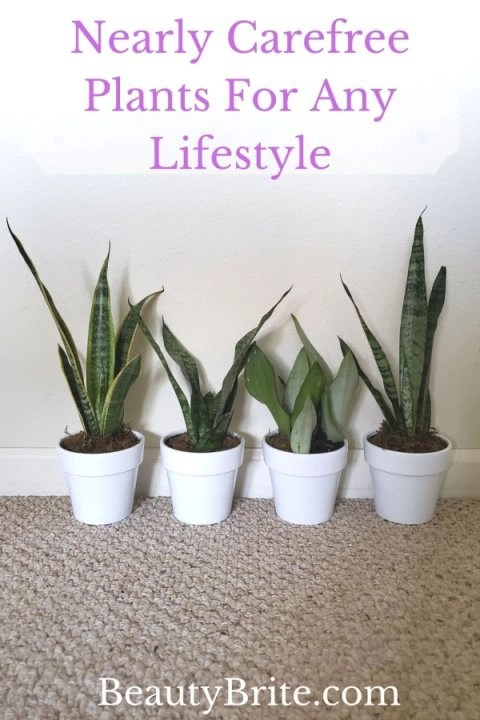 Nearly Carefree Plants For Any Lifestyle