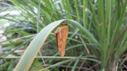 vlinder hortus